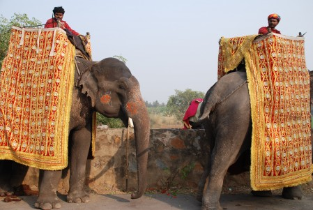 wedding elephants