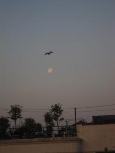 moon setting at sunrise, the terrace