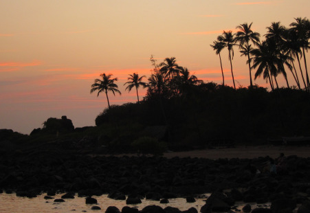 Sunset and palm trees on beach in Goa, India