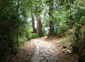photograph of pathway through the woods in Sikkim, India
