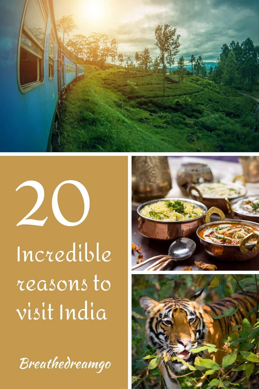 reasons to visit India trains food tigers