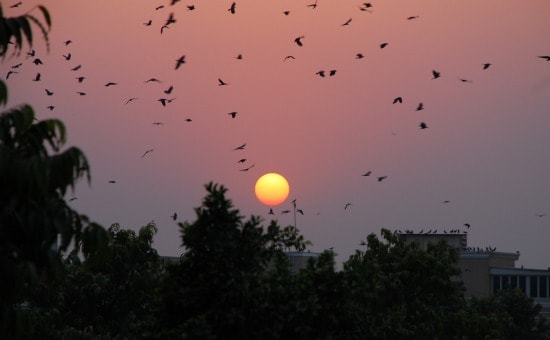 Photograph of Delhi's pink sunset in India