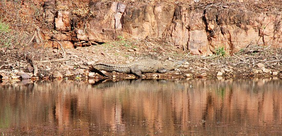 Photograph of reclinign crocodile, Ranthambhore national park and tiger reserve, Rajasthan, India