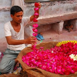 Photograph of flower seller in India