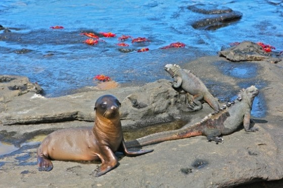 Photo by Bret Love and Mary Gabbett of GreenGlobalTravel in Galapagos Islands