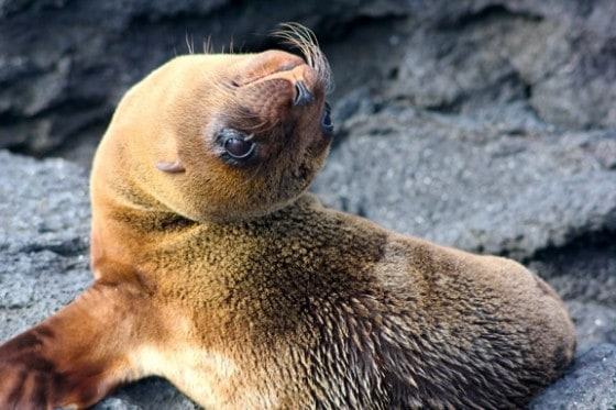 Photograph by Bret Love and Mary Gabbett of GreenGlobalTravel in Galapagos Islands