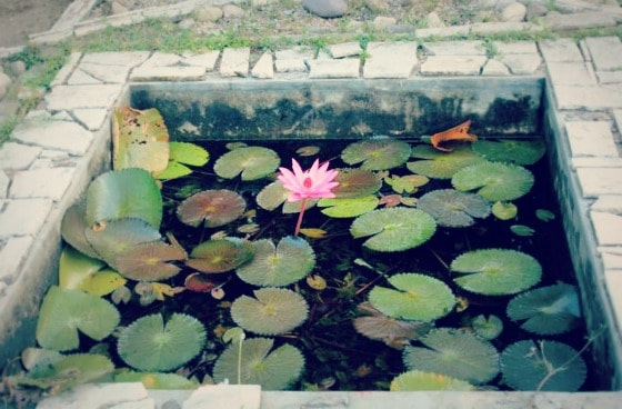 Lotus pond on the grounds of Aurovalley Ashram, a place of natural beauty.
