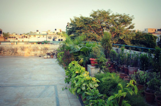 My sanctuary: The terrace in South Delhi