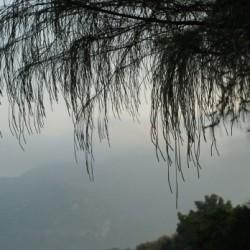 Mount Arunachala
