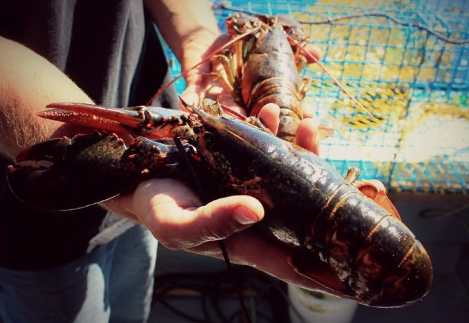 Lobster on Prince Edward Island Canada