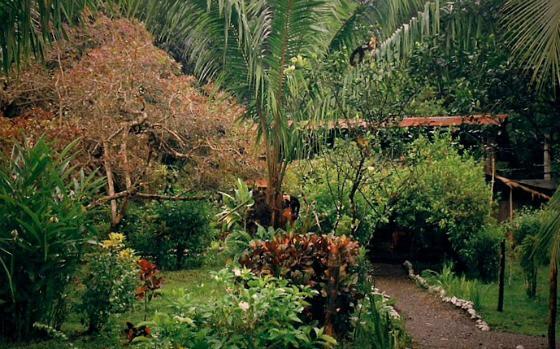 Bahia Drake, Cocta rica, ecolodge, rainforest
