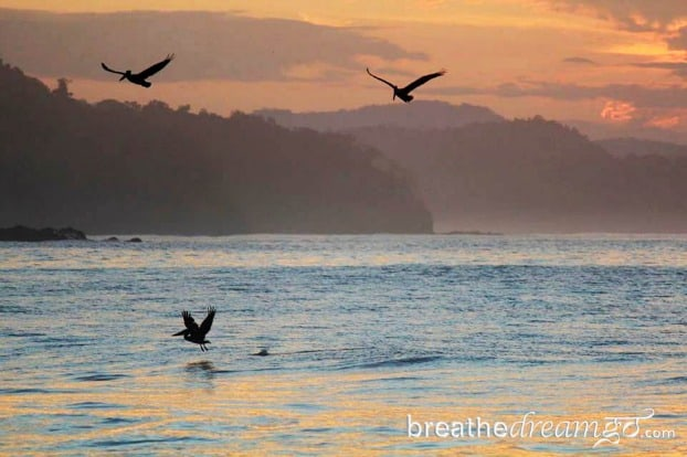 Sunrise and pelicans at Punta Islita, Costa RIca.