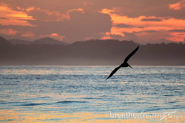 Pelican at sunrise in Costa Rica.