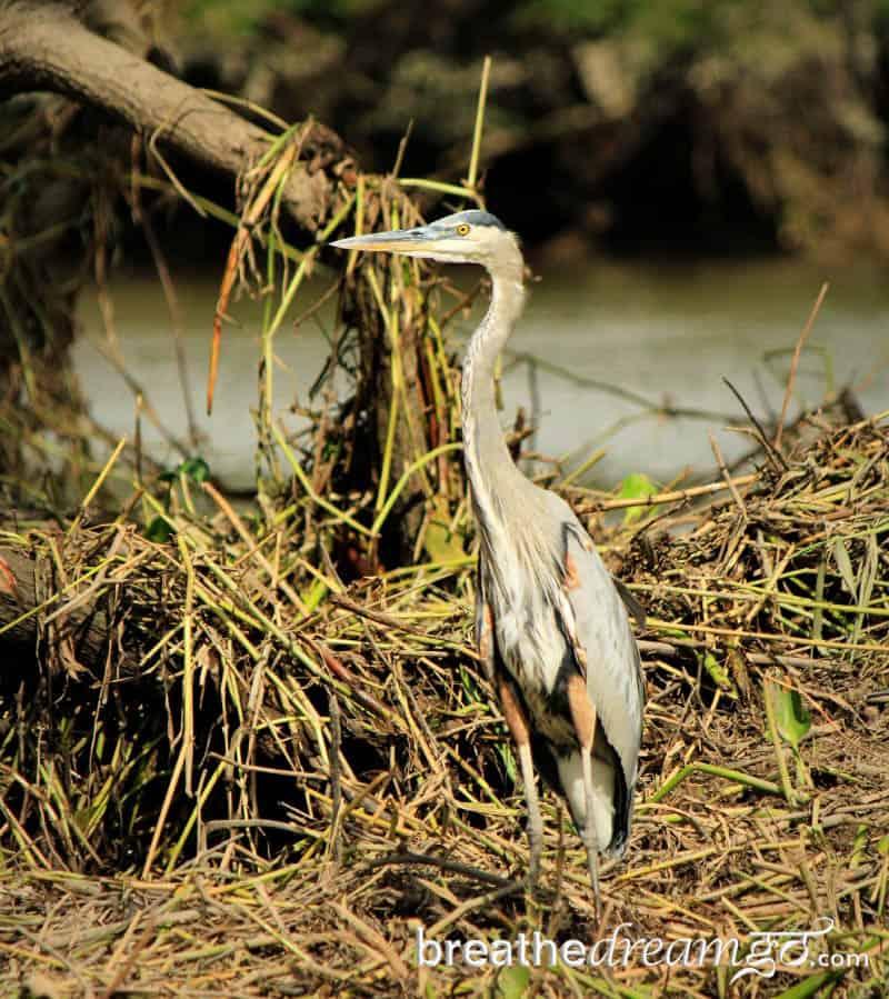 Kensington Tours private guided tour Palo Verde National Park Guanacaste Costa Rica
