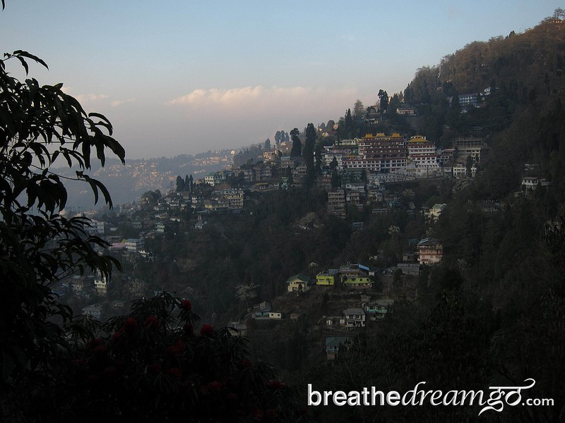 Tea and sympathy in Darjeeling