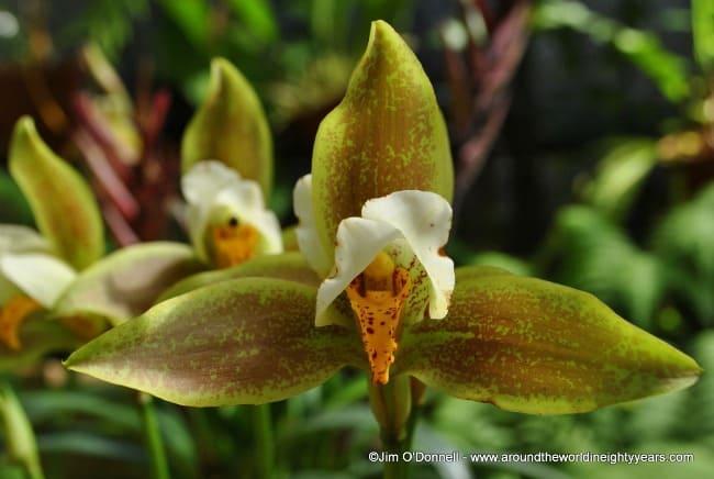 flowers Costa Rica ecotourism