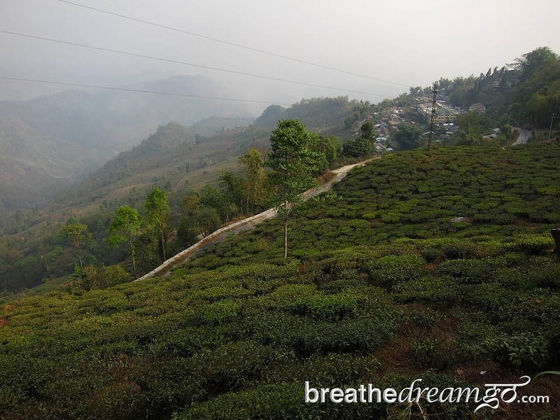 Tea, Darjeeling, India