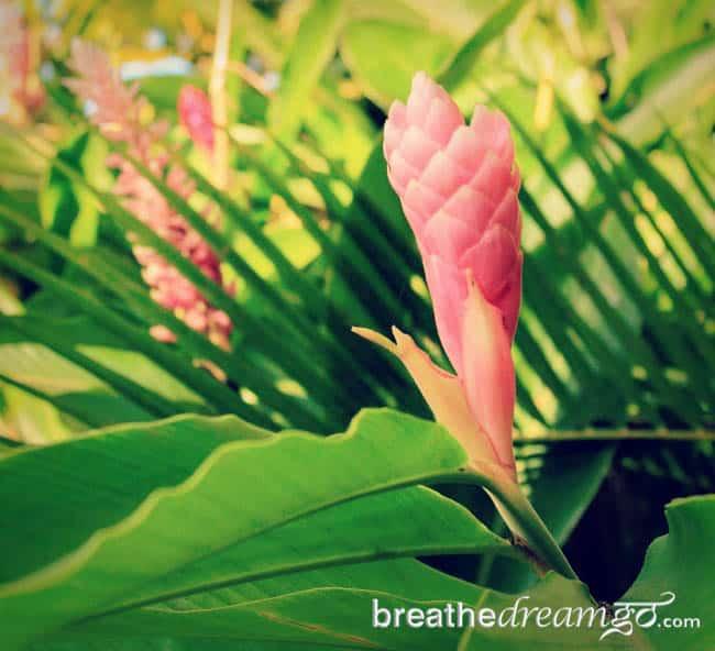 flowers Costa Rica ecotourism Arenal volcano hotspring