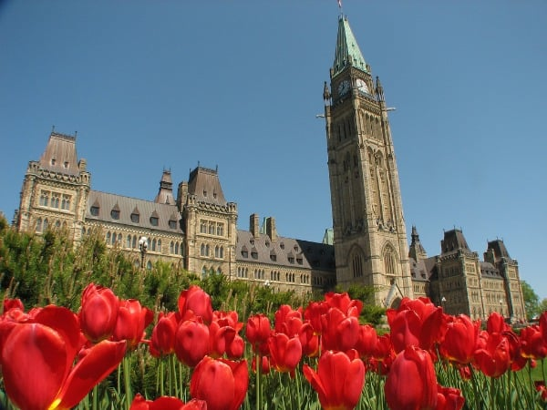 Tulips and Parliament Building Ottawa, Canada