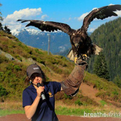 Grouse Mountain, Vancouver, British Columbia, Canada, Explore Canada, wildlife, birds, bears