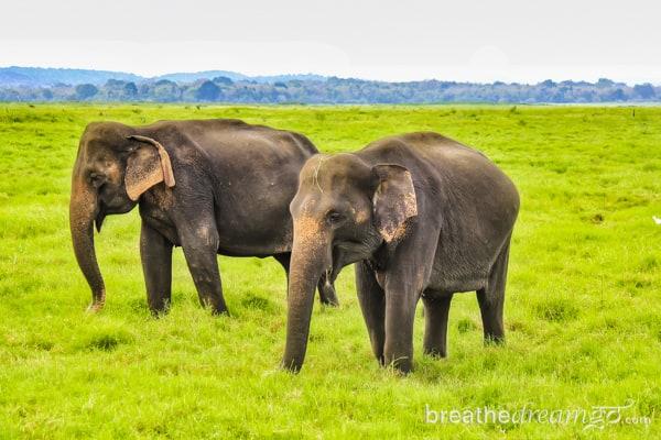 Sri Lanka, TBCAsia, Cinnamon Hotels, Sri Lankan Airlines, elephants, Kaudulla National Park, South Asia