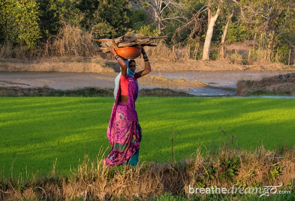 In the rice paddies of Chhattisgarh, India