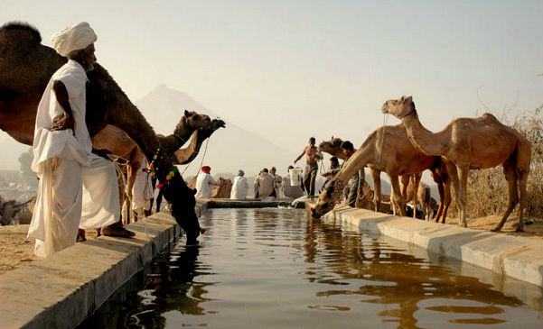 Indian Festivals include Pushkar Camel Fair