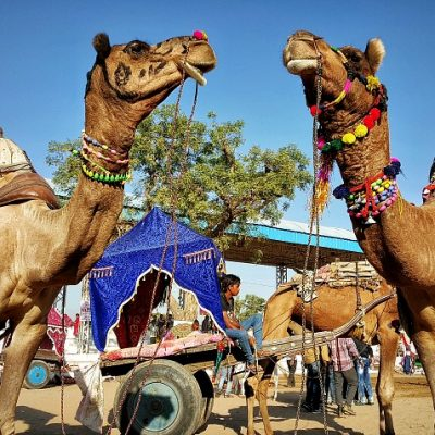 The sacred and profane at the Pushkar Camel Fair