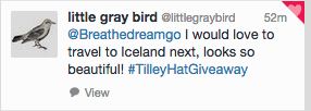 Little Gray Bird
