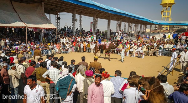 Pushkar, India, Rajasthan, Zostel, Camel Fair, camel, lake, Brahma, The Sacred Pushkar, Teamwork Arts, music,