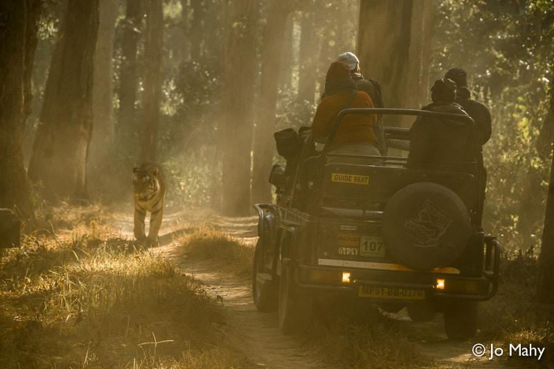 India, travel, tour, small group, Exodus Travels, Exodus, woman, women, solo, tiger, tigers, safari, advice, tips, travel tips, responsible travel, responsible tourism, sustainable