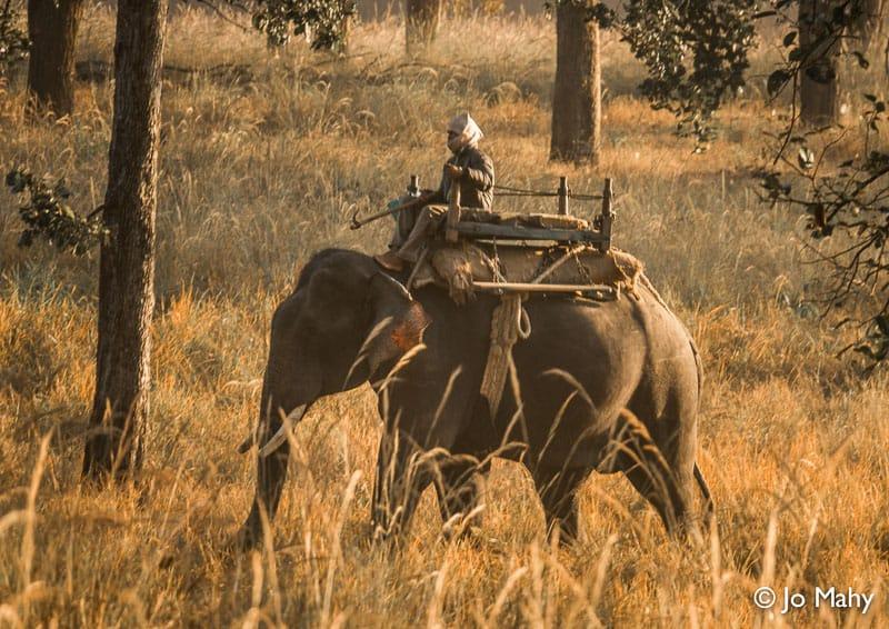tiger, tigers, India, Madhya Pradesh, safari, Exodus Travels, tour, travel, wildlife, animal, park, tiger reserve, Pench, Bandhavgarh, Kanha, sustainable, responsible, elephant, mahout