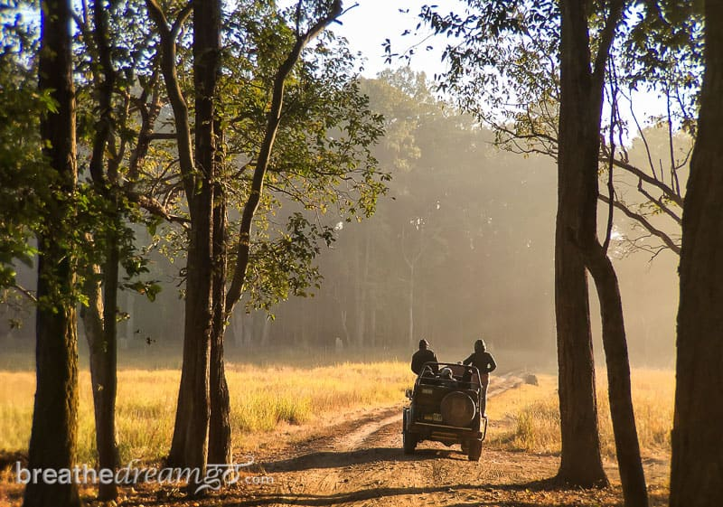 tiger, tigers, India, travel, tour, tourist, park, reserve, Pugdundee, safari, safaris, Kanha, Bandhavgarh, Pench, Madhya Pradesh, Kanha Earth Lodge
