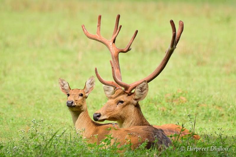 Essay on kanha national park