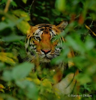 tiger tour, India tour, national parks in India