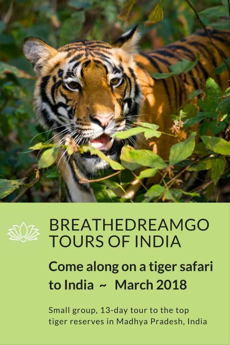 Tiger safari in National Parks in India