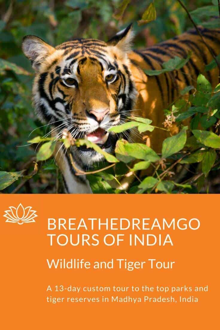 tiger safari, India, tour, national parks in India