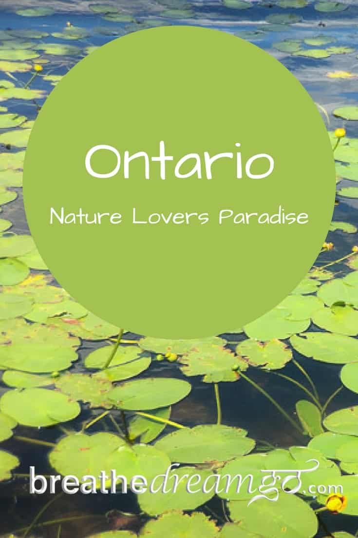 things to do in Ontario, Haliburton forest, Ontario getaways, wolf centre
