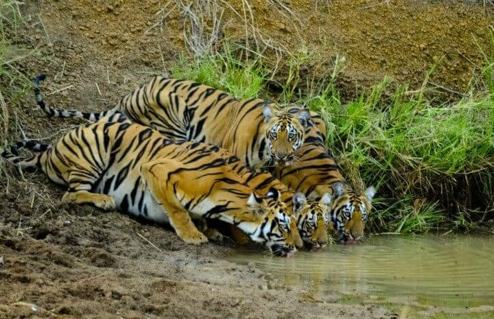 North India, places to visit in India, tourist places in India, tigers