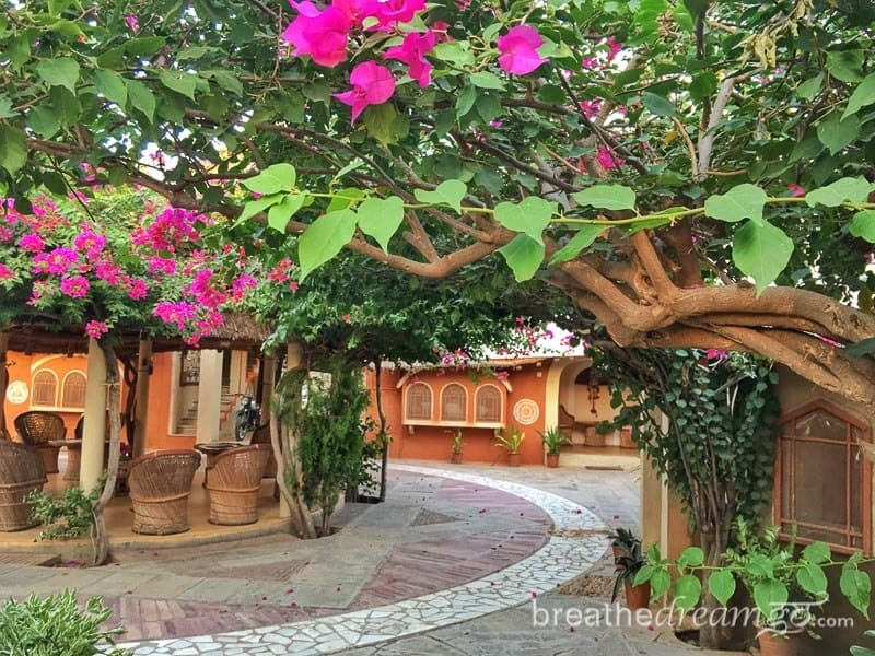 India trip, Rajasthan, Nawalgarh, Shekhawati, Apani Dhani