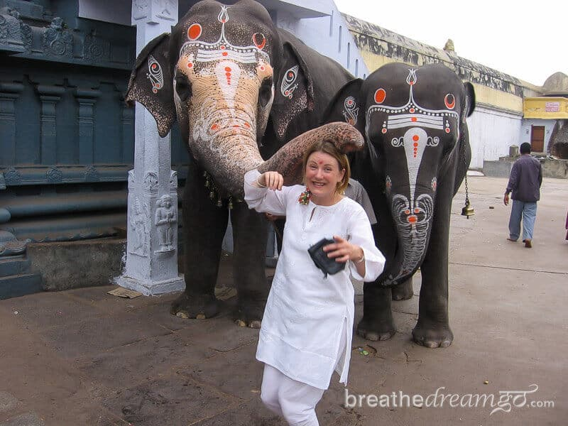 Indian elephant blessing at a temple in India #WorldElephantDay #IndianElephants