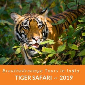 tiger safari, India, tour