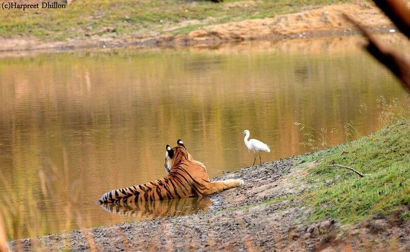 Kanha National Park, Khana hotels, national parks in mp, India, tiger, Madhya Pradesh
