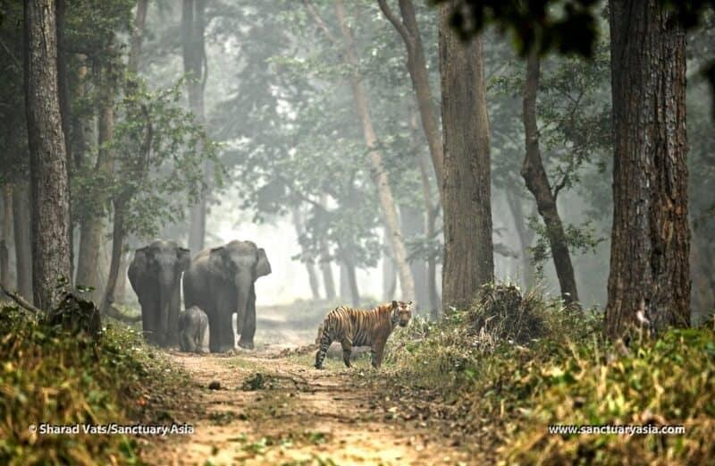 Eco tour, ecotravel, responsible tourism, green tourism, green holidays, sustainable travel, benefits of ecotourism, ecotourism destinations, ethical tourism, ecotourism, elephant, tiger