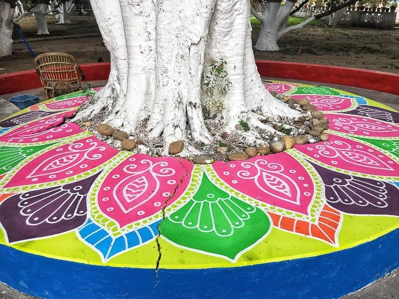 The beauty of a tree adorned with colourful decorations at Aurovalley Ashram, India for International Yoga Day #YogaDay #India #IncredibleIndia