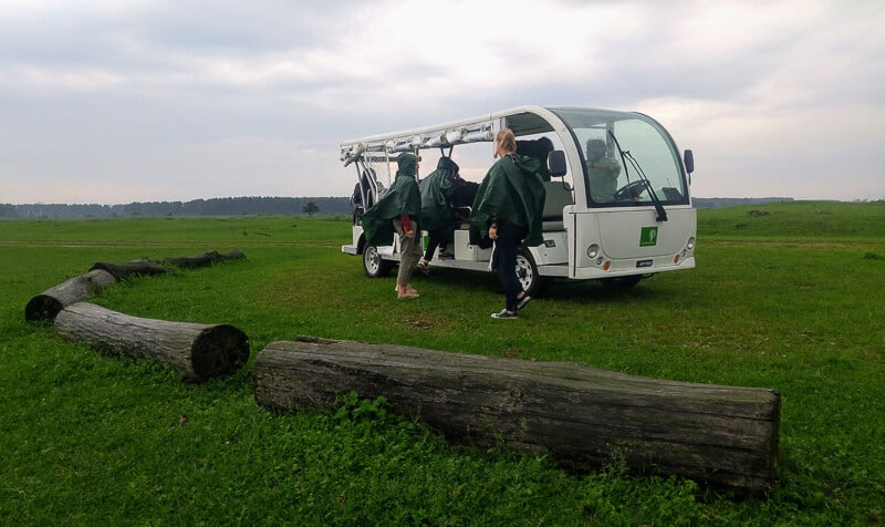 Ecocar guided wildlife tour at ecoourism site Oostvaardersplassen, a wetland nature reserve in the Netherlands #EcoTourism #Netherlands