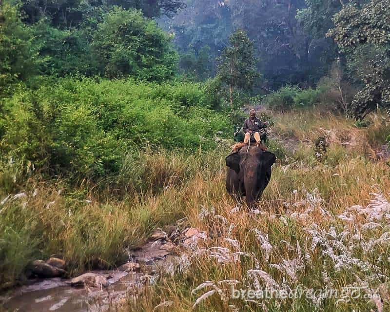 Elephant and mahout on patrol in Kanha National Park and tiger reserve