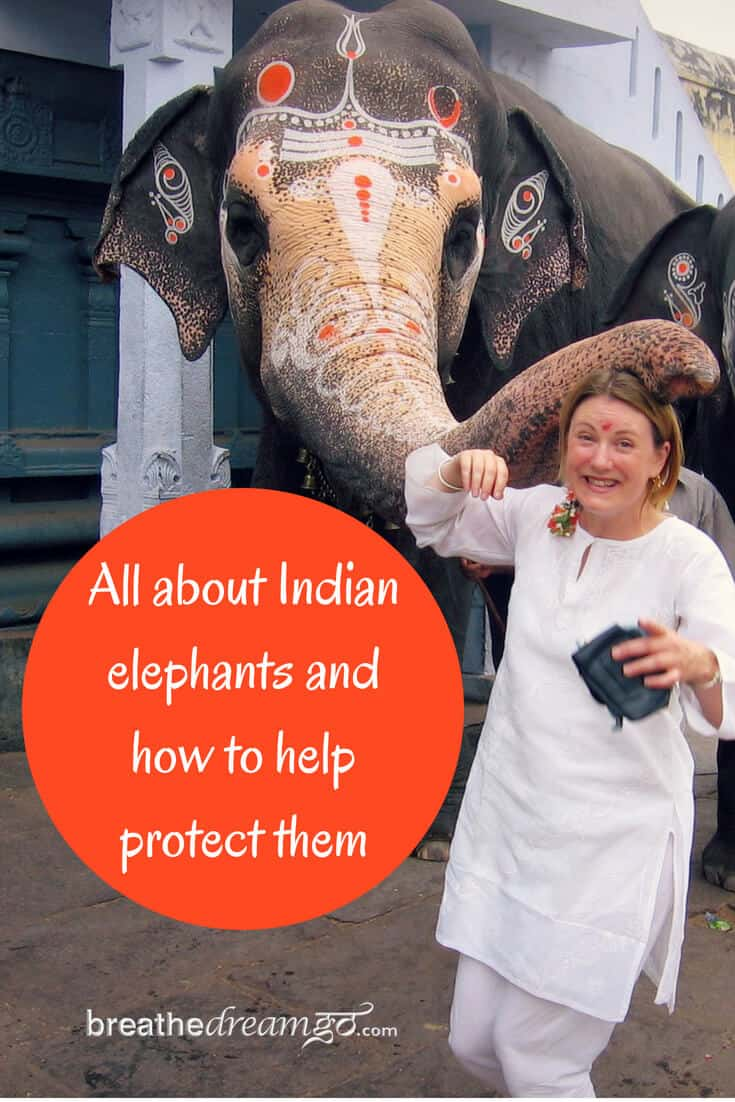 Protecting Indian elephants #IndianElephants #WorldElephantDay