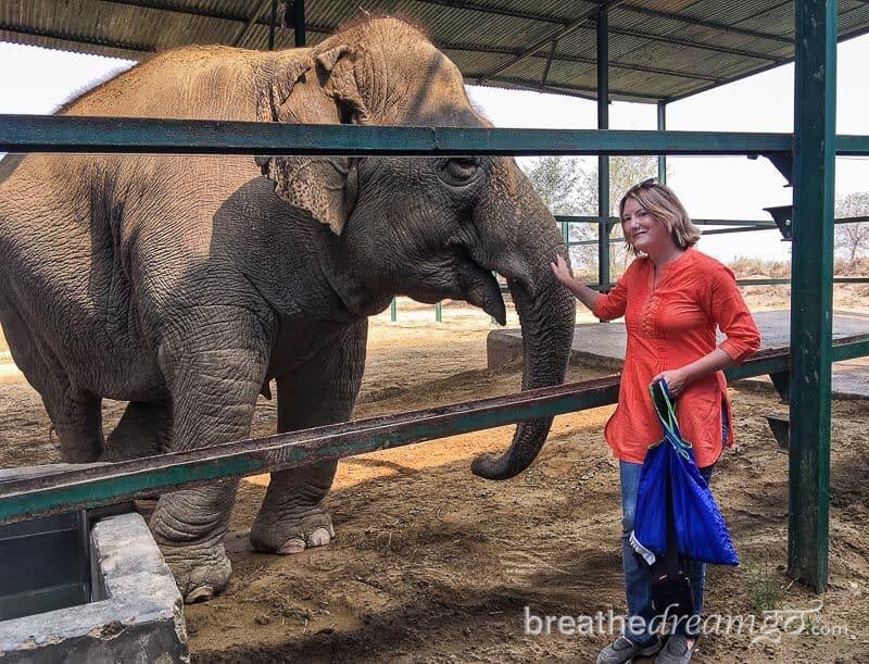 Wildlife SOS Elephant Conservation and Care Centre #WorldElephantDay #IndianElephants