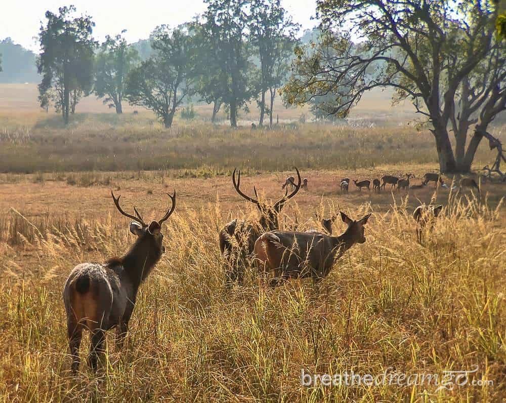 Best tourist places in Madhya Pradesh Kanha